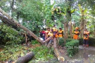 15 Pohon Tumbang Akibat Angin Muso  di Kulonprogo, Ini Penjelasan BPBD
