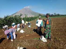 Untuk Peningkatan Ketahanan Pangan, Dandim 0205/TK Perintahkan Jajaran Dampingi Para Petani