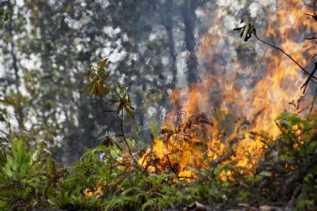 17 Titik Api Terindikasi Karhutla Tersebar di Riau