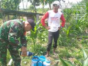 Babinsa Bantu Penyemprotan Gulma Tanaman Jagung Milik Kelompok Tani di Desa Munthe