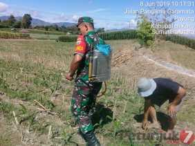 Babinsa Dampingi Petani Penyemprotan Guna Basmi Hama Tanaman Jagung di Desa Selandi