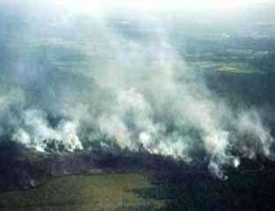 Dana Penunjang Karhutla di Riau Diusulkan Ke Pusat