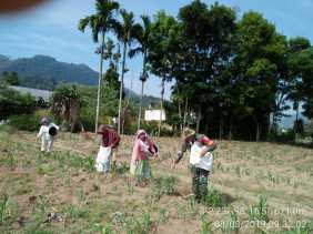 Babinsa Bantu Petani Desa Mbetong, Suheri Tarigan: Kelihatan Tulus dan Iklhas