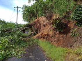 Hujan Deras, Akses Jalan di Desa Ujung Tran Tertutup Pohon Tumbang dan Api Listrik Padam