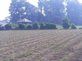 Kemarau Landa Desa Sumbul (Kabanjahe), Petani Ini Terancam Gagal Panen Karena Kekurangan Air