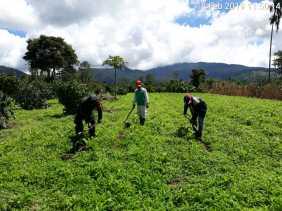 Swasembada Pangan, Sertu Rahmat Bantu Petani Bersihkan Tanaman Jagung