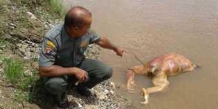 Pembantaian Orangutan, Menteri LHK: Tindak Tegas
