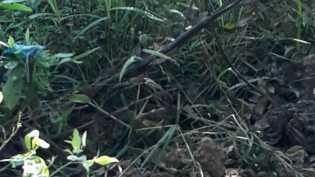 Siak: Warga Menemukan Mayat Bayi Perempuan di Sungai Mandau