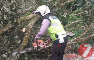 Hujan - Angin Kencang Tumbangkan Pohon di Jamin Ginting: Ini Imbauan Kasatlantas Polres Karo
