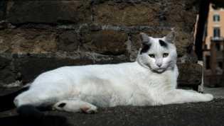 Perempuan Jepang Tewas Setelah Tertular Kutu dari Kucing Liar