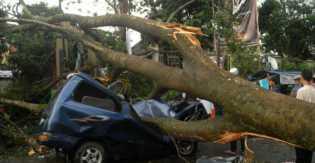 Angin Kencang, 12 Mobil Rusak Ditimpa Beringin Berusia Lebih 100 Tahun  Karena Tumbang