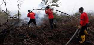 Tim Pemadam Kebakaran Berjibaku Padamkan Api di Indragiri Hilir