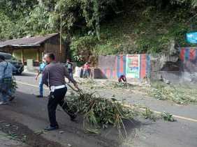Pohon Tumbang Akibat Diterjang Angin, Arus Lalu Lintas di Jalan Jamin Ginting Sudah Kembali Normal