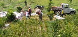 Babinsa Bantu Petani Situnggaling Panen Padi, Kalter Lingga: Proaktif Dampingi Kegiatan Petani