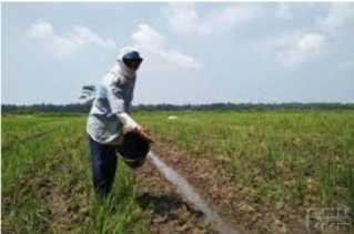Petani Sebut Pupuk Subsidi Langka, Kadis Pertanian Karo: Sudah Kita Ajukan Sebanyak 5 Ribu Ton
