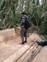 Kades Segamai Patroli Perambahan Hutan: Temukan Kayu Siap Jual di Kanal PT.SPA
