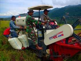 Koramil 09/Lau Baleng Panen Padi Bersama Petani Desa Lau Solu