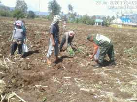 Musim Tanam, Babinsa Koramil 08/TB Dampingi Petani Desa Kuta Galuh Tanam Jagung