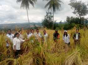Upsus Babinsa: Panen Padi Poktan Juma Jahe, Desa Jandi Meriah Mengalami Peningkatan