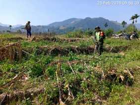 Babinsa Bantu Petani Desa Negeri Cabut Rumput Disekitar Tanaman Jagung