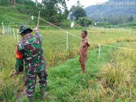 Saat Pantau Tanaman Padi di Desa Siganderang, Babinsa Minta Petani Tekun Jaga Serangan Hama