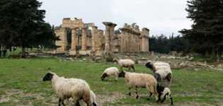 Sejak Penggulingan M.Gadhafi: Dijarah dan Terbengkalai, Kota Kuno Libya Makin Merana