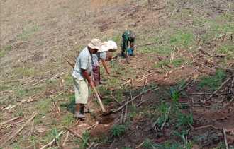 Babinsa Bantu Petani Tanam Jagung Milik Hardi Milala di Desa Siganderang
