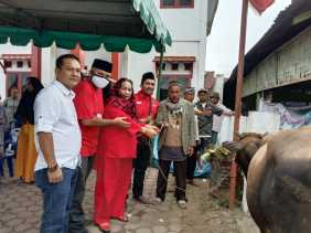 Idul Adha 1441 H, DPC PDIP Karo Kurban Satu Ekor Lembu di Kabanjahe