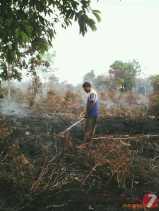 Ratusan Hektare Kebun Masyarat Desa Mutiara Gambut dan Segamai Ludes Terbakar