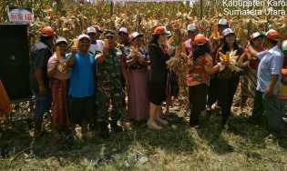 Babinsa Koramil 06/Munthe Bantu Petani Desa Singgamanik Panen Jagung