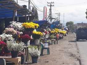 Natal dan Tahun Baru, Pembeli Bunga Hidup Mengalami Peningkatan di Karo