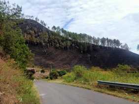 Koramil 02/TP Terus Berjibaku Padamkan Karhutla di Desa Tongging Seluas 40 Hektar