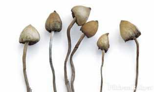 BBPOM: Jamur Crispy atau Keripik
