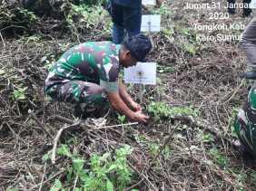 Cegah Erosi, Kodim 0205/TK, Masyarakat Doulu, dan PT Aqua Tanam Pohon di Gunung Sibayak