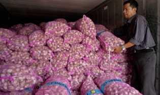 Kebutuhan Untuk Bawang Putih 500ribu Ton/Tahun, Ini Penyebabnya Masih Impor