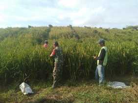 Ini Kegiatan Serka J Jingga bersama Kelompok Tani Beringin di Desa Sibolangit