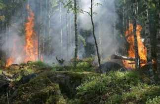 Kebun Kelapa Milik Ismail Terbakar,  Polres Inhil Amankan Seorang Pria