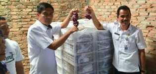DPP Pekanbaru Sidak Distributor Buah Anggur Ilegal