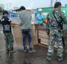 BBKSDA Riau Berhasil Evakuasi Harimau Terjebak di Kolong