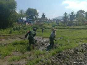 Memasuki Masa Tanam Padi, Babinsa Koramil 07/Juhar Bantu Petani di Desa Siganderang